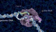 """""""魔法剪刀""""CRISPR-Cas9搭车""""DNA纳米纱团""""进入细胞核?!"""