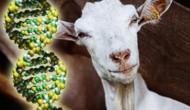 盘点美国FDA批准上市的转基因动植物生产的新药