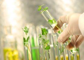 转基因食品的安全性