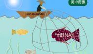以小博大:RaNA Therapeutics收购夏尔mRNA药物研发平台