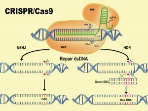 张锋暂时成为CRISPR技术法定发明人