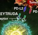 Keytruda/化疗组合批准用于肺癌一线:普天之下莫非王土?