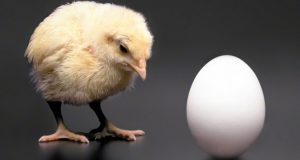 chicken-or-egg-cropped1-750x400