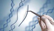 小分子继续挑战核酸药物,基因编辑进入复杂疾病