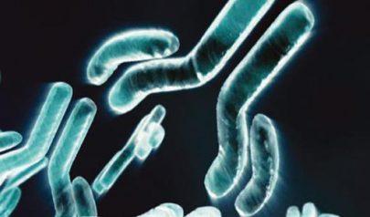 技术高难、战术单调:双特异抗体进展