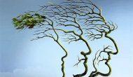 达沙替尼/槲皮素组合清除衰老细胞
