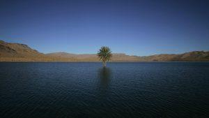 a-palm-tree-grows-in-the-errachidia-reservoir-near-the-ziz-oasis