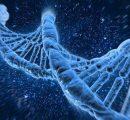 从基因的角度解析心血管疾病风险(一)从肝脏到心脏