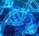 基因疗法遭遇路障:科学探索的代价