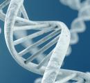 AAV基因疗法临床被叫停